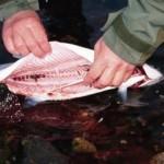Fiske_og_natur_2002_015