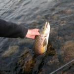 Flott_fisk_fra_sterdalen