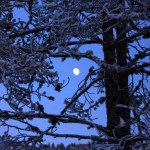 Vintermåne