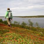Vandring på Kola halvøya.