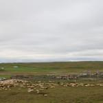 innsamling av sauer på Island