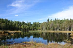 Ydillisk skogstjern i Bærumsmarka