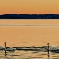 Jakt, fiske og natur 2015